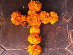 marigold cross 2